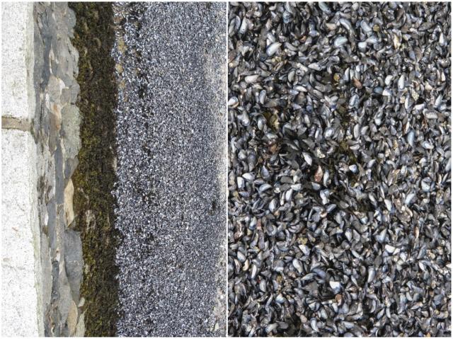 Mussels & Rocks
