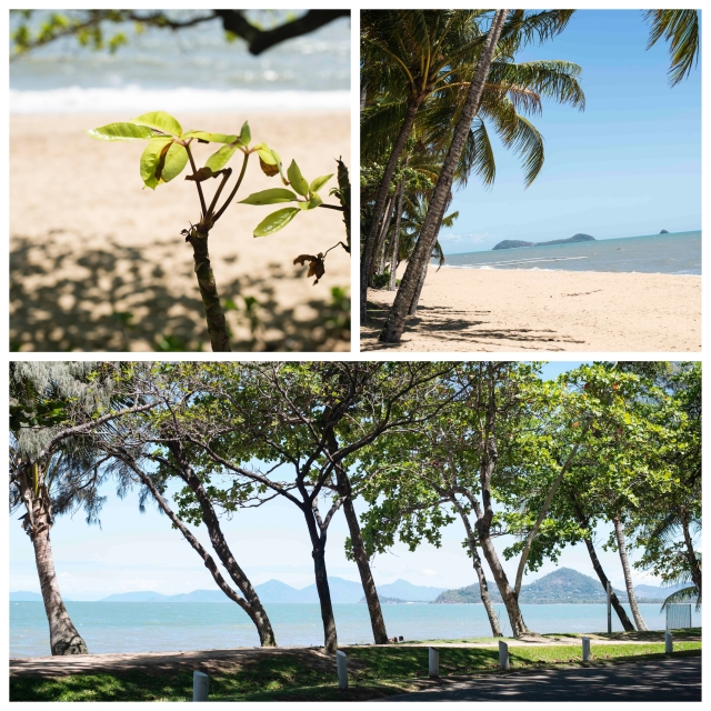 Palm Cove Beach & Trees